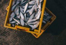 fisk med proteiner